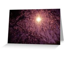 New Day - Sun Through Cherry Blossoms Greeting Card