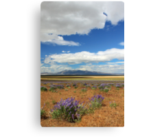 Lupines In Honey Lake Valley Canvas Print
