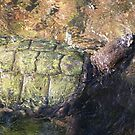 Impressionistic Snapping Turtle by KelseyGallery