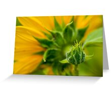 Nature's Abstract 9 Greeting Card