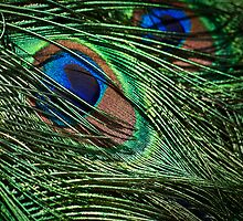 Iridescent plumage by Celeste Mookherjee