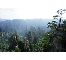 Rock Forest Photographic Print