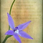 Wax Lip Orchid - Gossodia Major by pcbermagui