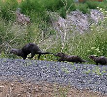 Otter Family by Gina J