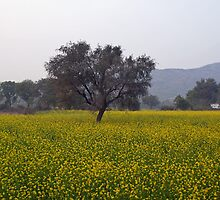 A field of mustard with a tree and mountains in the background by ashishagarwal74