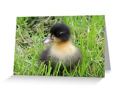 Duckling 05 Greeting Card