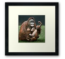 Orangutan Mother and Baby Framed Print