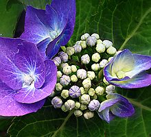 Bouquet of Buds by naturelover