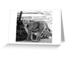MONKEY IN NEPAL-HOW IS THIS FOR A MODELING JOB? Greeting Card