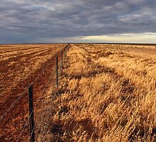 Hope of rain on the Hay Plain by Timothy John Keegan