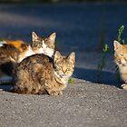 Three Amigos by Richard Lee