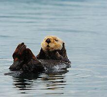 Alaskan Sea Otter by wildphotos