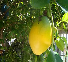 Passion Fruit (Maracujá) by Jabesmar Guimarães