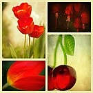 Nature in Red by Annie Lemay  Photography