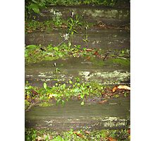 Mossy Steps Photographic Print