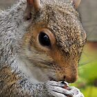 Squirrel 57 by Magic-Moments