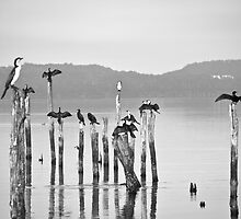 Cormorants by pennyswork