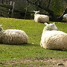 Sheeping by Christeen Thornton