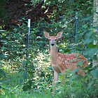 Backyard Fawn by Ron Russell