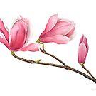 Magnolia by Cheryl Hodges