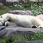 Chillin' Polar Bear by Brandy Bentz-Jackson