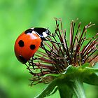 Ladybird 10 by Magic-Moments