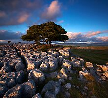 Dales Delight by Jeanie