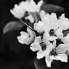 Blossom - Black and White by Emily Jones-Blachowicz