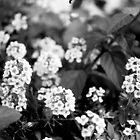 Little Flowers - Black and White Print by Emily Jones-Blachowicz