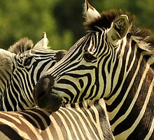 Stripy 'oss by JaymeeLS