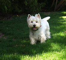 Westie luv by MarianBendeth