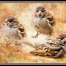 Sparrow by KBritt