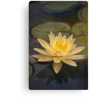 Pale yellow lily Canvas Print