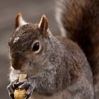 Grey Squirrel by rosepetal2012