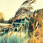 alzette river 9 by Diana Calvario