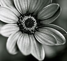 A Beauty in Black and White by Kate Halpin