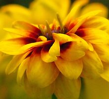 Blur of Yellow by lorilee