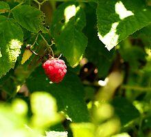Raspberry by lorenzoviolone