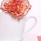 Carnation in Teacup by MelissaSue