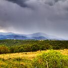 Summer Rain in Alto, New Mexico by Ray Chiarello