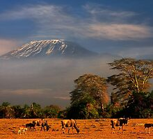 Kilimanjaro in early morning light, Amboseli National Park, Kenya, Africa. by photosecosse /barbara jones