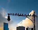 New York Is For The Birds - Manhattan Urban Sillhouette by Mark Tisdale