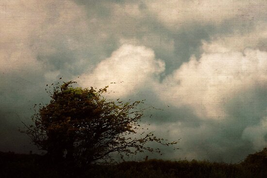 A lonely wind by Agnes McGuinness