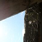Sunlight and Spiderwebs by Goerzen
