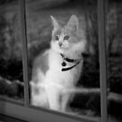 window kitty by evvy84