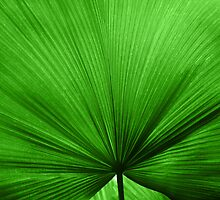 The Big Green Leaf by Natalie Kinnear