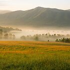 Golden Mountain Sunrise, Cades Cove, Smoky Mountain National Park by Mike Koenig
