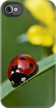 Ladybird on grass by Vicki Field