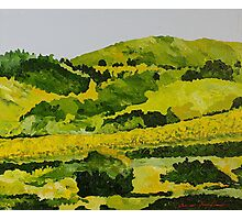Vineyard in the Hills Photographic Print