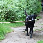 Dog meets stick! by Ross Sharp
